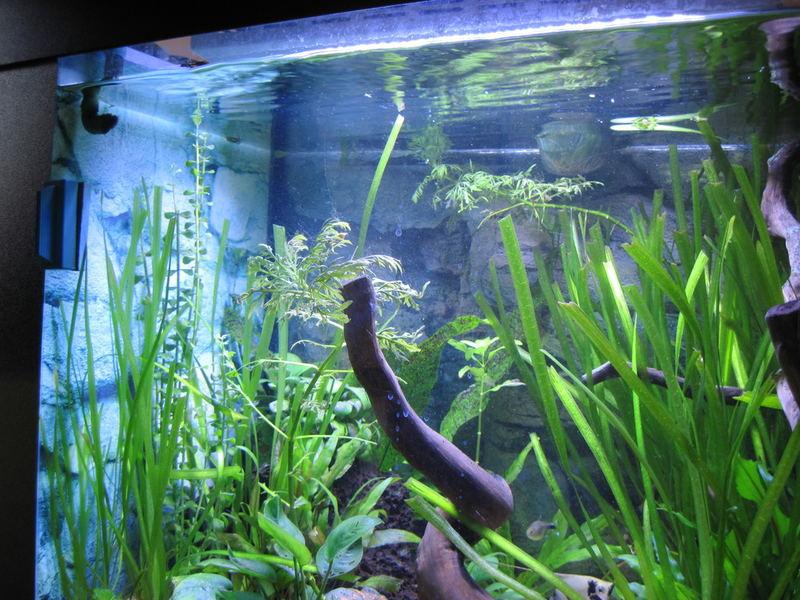 Pannello led acquario 50 led 1w 50w con timer per lunar for Led per acquario